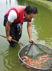 Mr. Tomono working at a field pond
